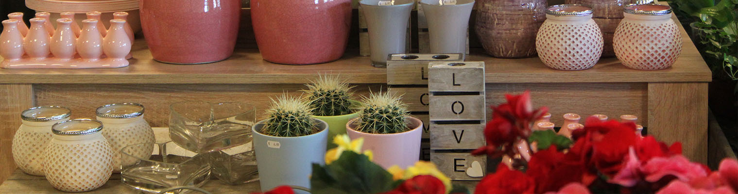 Uitgebreid Assortiment bloemen en planten